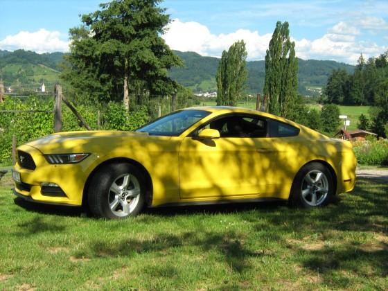 Mustang 3,7 L V6 MY 2015 in unserem Garten