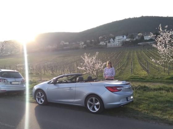 Mandelblütenfest 2019 in der Pfalz